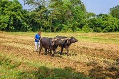 犁农业领域的尼泊尔农夫 免版税库存照片