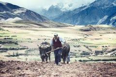犁土豆的佃农一个领域, Maras, Urubamba谷,秘鲁 免版税图库摄影