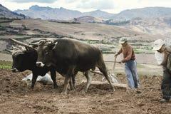 犁土豆的佃农一个领域 免版税库存图片