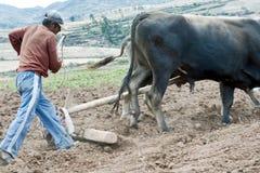 犁土豆的佃农一个领域 库存图片