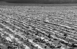 犁沟在冬天 库存照片