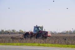 犁领域和乌鸦的拖拉机飞行在他附近寻找食物 免版税库存图片