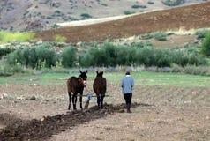 犁领域在摩洛哥 免版税图库摄影