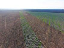 犁领域拖拉机的顶视图 disking土壤 在飞行在拖拉机我的收获海鸥以后的土壤耕作 库存照片