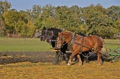 犁领域的三匹马队  免版税库存照片