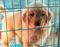 犬拘留所小狗 免版税库存照片