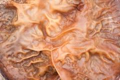 犹太人耳朵真菌耳状幼虫耳状报春花judae纹理 库存照片