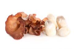 犹太人` s耳朵和草菇在-被隔绝的白色背景 库存照片