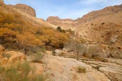 犹太沙漠山风景 免版税库存图片