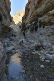 犹太沙漠绿洲的峡谷 库存照片