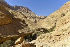 犹太沙漠风景 免版税库存照片