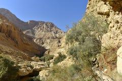 犹太沙漠风景 免版税图库摄影