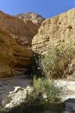 犹太沙漠风景 库存照片