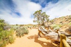 犹他风景-异常的云彩和树 库存图片