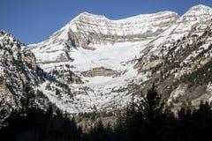 犹他Wasatch春天雪和杉树山场面  库存图片