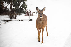 狂放亲爱在庭院里在冬天 免版税库存图片