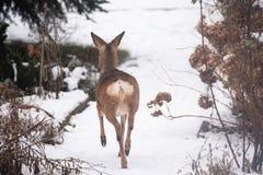 狂放亲爱在庭院里在冬天 免版税库存照片