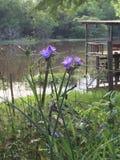 狂放在多沼泽的支流 免版税库存照片