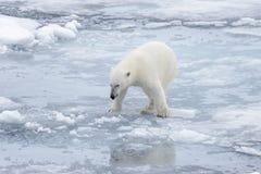 狂放极性在北极海涉及浮冰块 库存图片