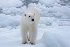 狂放极性涉及在北极海关闭的浮冰块  库存图片