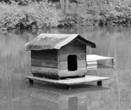 狂放的乌龟议院在鸭子池塘 免版税库存照片