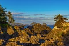 狂放的和平的足迹的海岸线在Ucluelet,温哥华岛, B 免版税库存图片