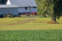 狂放的土狼狩猎在农场 图库摄影