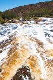 狂放的天鹅河珀斯澳大利亚 库存图片