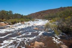 狂放的天鹅河珀斯西澳州 免版税图库摄影