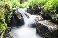 狂放的小河瀑布在有绿色植被的森林里 库存照片
