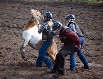 狂放的小马种族 图库摄影