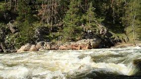 狂放的山河在森林里,从左到右显示全景的照相机平底锅 股票视频