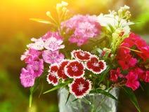 狂放的康乃馨另外颜色花束 图库摄影