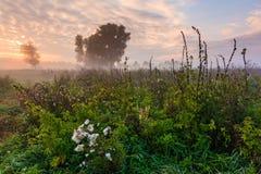 狂放的有薄雾的草甸在黎明 库存图片