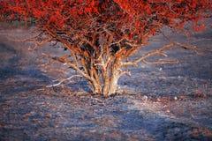 狂放的树在黎明在清早 库存图片