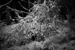 狂放的梦想在多雪的夜 库存图片