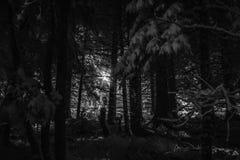 狂放的梦想在多雪的夜 图库摄影