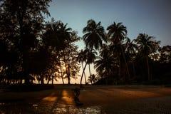 狂放的棕榈树海滩晚上日落 免版税图库摄影