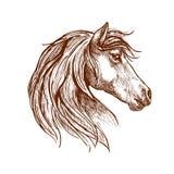 狂放的棕色马头剪影 库存照片