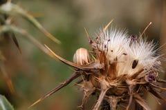 狂放的棘手的植物和花,与蜗牛 免版税图库摄影