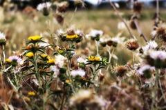 狂放的棘手的植物和花,流行音乐颜色 免版税库存图片