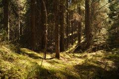 狂放的森林风景背景 免版税库存照片