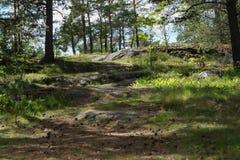 狂放的森林风景背景 免版税库存图片