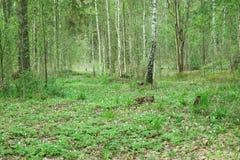 狂放的森林,隐蔽 库存照片