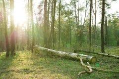 狂放的森林,隐蔽 库存图片