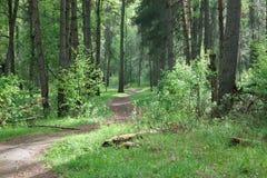 狂放的森林,隐蔽 免版税库存照片