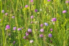 狂放的植物群和紫色花在一个绿色领域 免版税库存照片