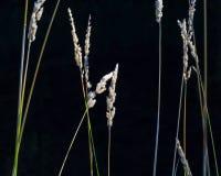 狂放的植物 图库摄影