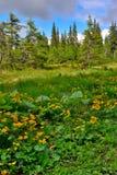 狂放的植被风景 免版税库存照片