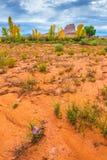 狂放的沙漠开花秋叶和野马小山犹他土地 库存图片